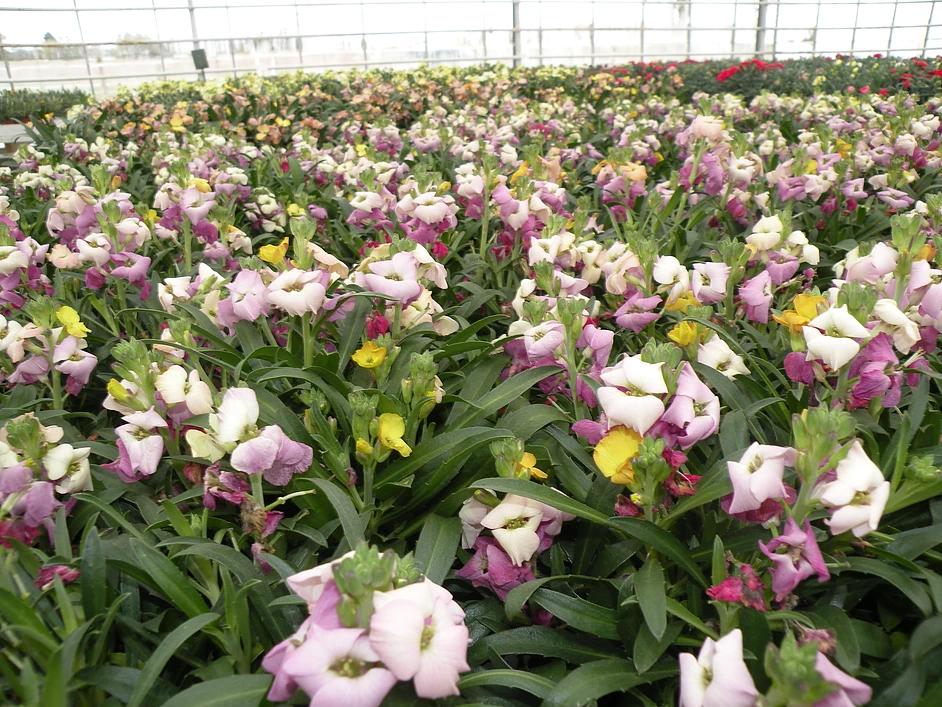 Blomster og Planter – Nyborg Blomster